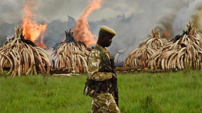 Сжигание слоновой кости