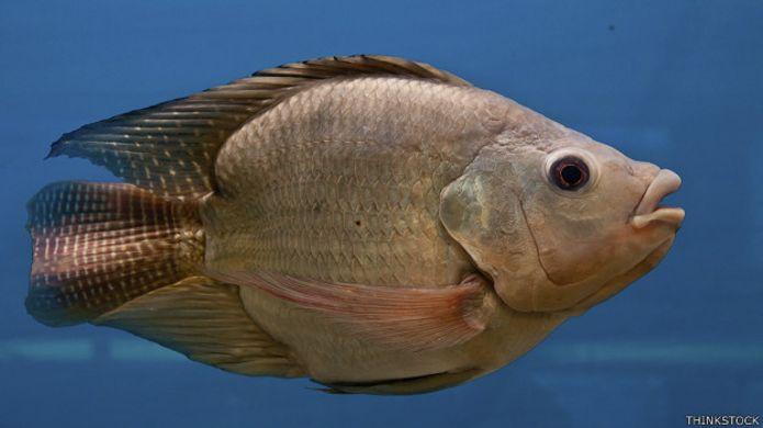 Veneno: Medicamentos lançados na natureza fazem peixes mudarem de sexo