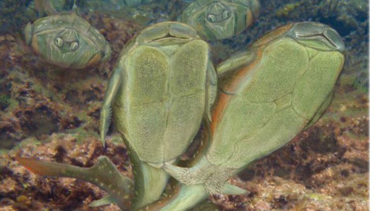 Peixe pré-histórico Microbrachius dicki