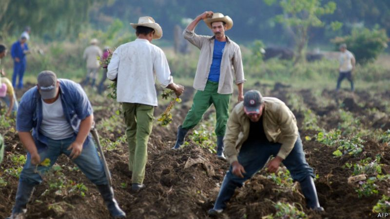 Campesinos cubanos