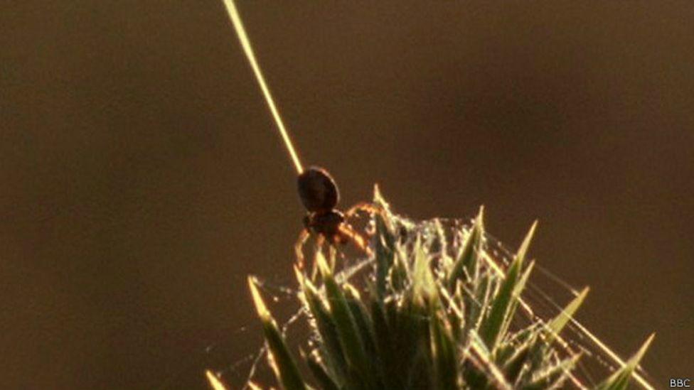 ¿Tienen superpoderes las arañas?