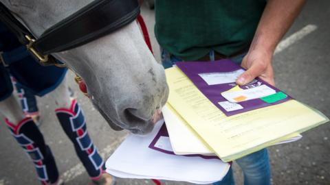 Horse and passport at Stansted