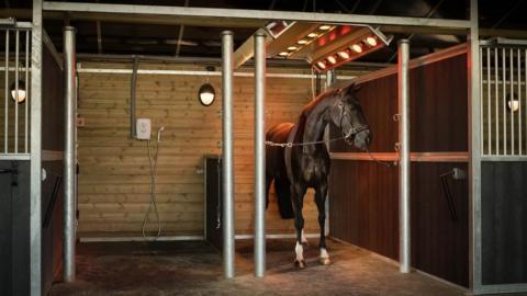 Horse solarium