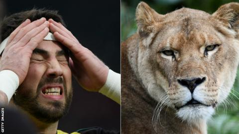 Wales hooker bitten by lion on tour in South Africa