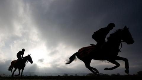 Racehorses on the gallops