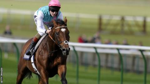 Frankel in racecourse gallop at Newmarket