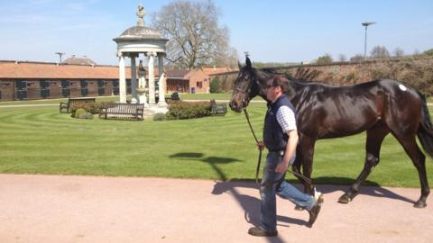 Over at the Tattersalls sales, a horse is paraded before entering the auction ring where buyers from all over the world will bid for what they hope may be a Classic winner of the future