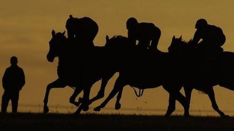 Horses on Newmarket gallops