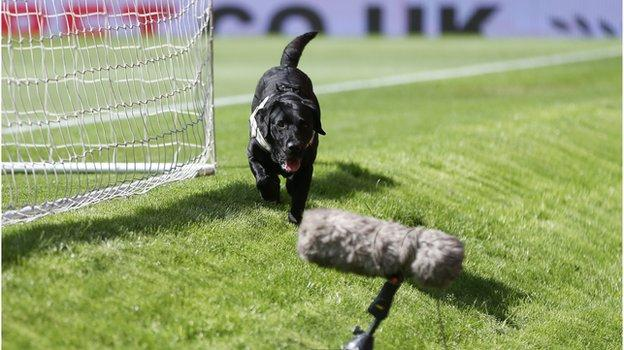 A police sniffer dog at Old Trafford