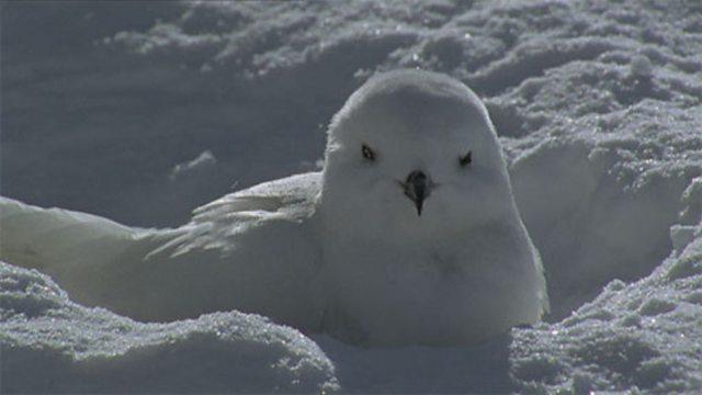Antarctic nunataks