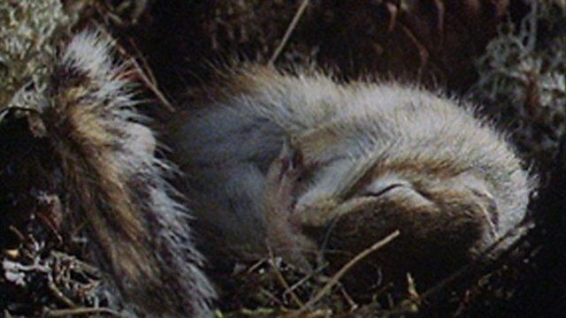 Siberian hibernation