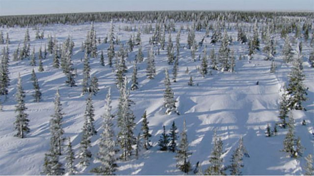 Boreal forest aerials