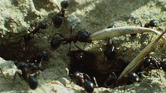 Ant's harvest
