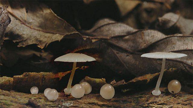 Fungal timelapse