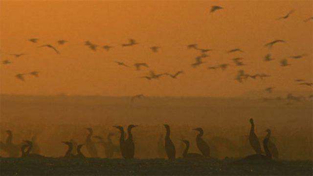 Desert seabirds