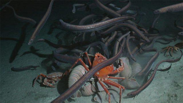 Deep sea scavenge