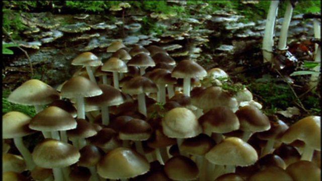 Fungi time lapse