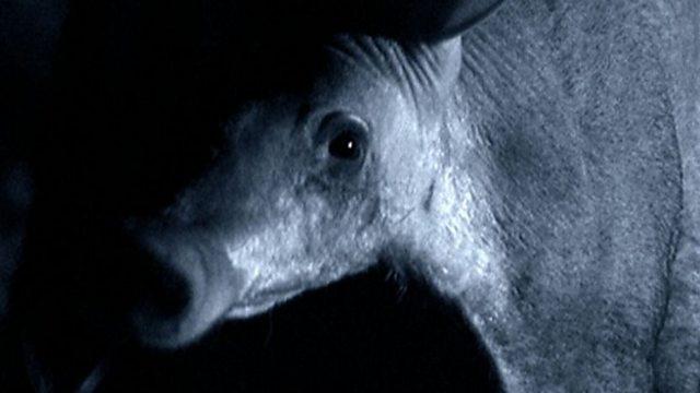 Aardvark diet