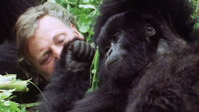 David Attenborough encounters gorillas