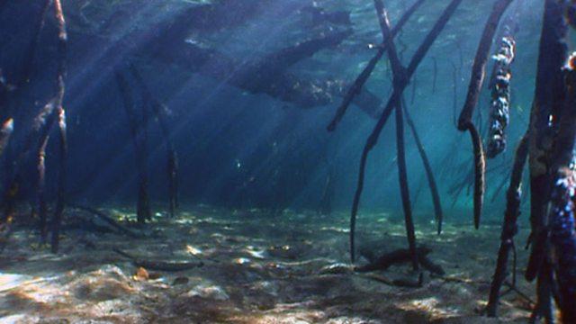 Mangrove paradise