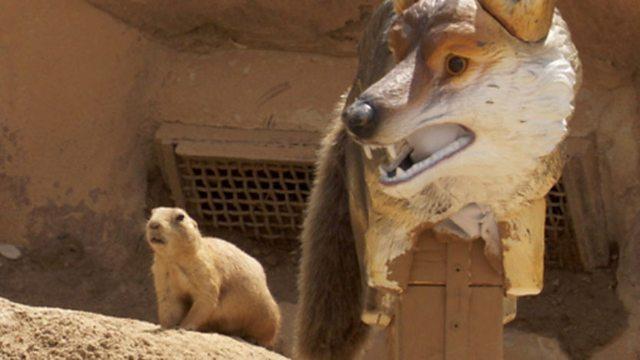 Zoo communication