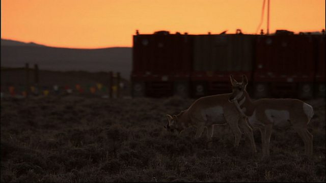 Pronghorns under pressure