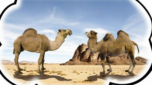 Know your camels