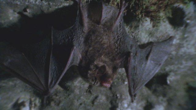 Water bats
