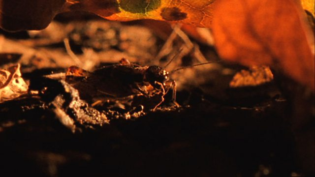 Leaf litter life