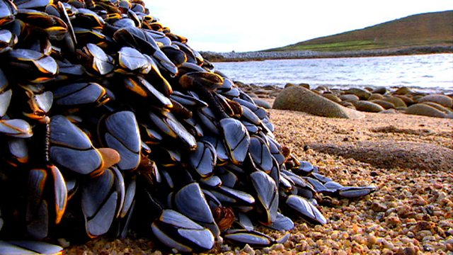 Beached barnacles