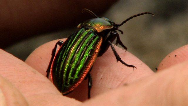 Beetle drive