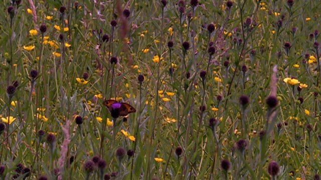 Marvellous meadows