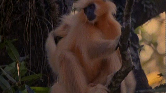 Rare monkey