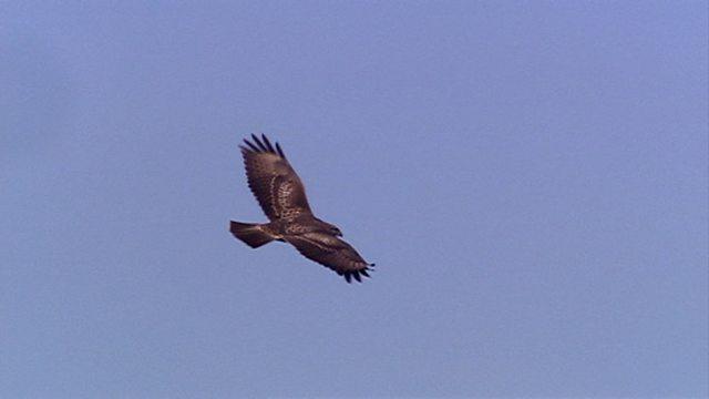 Tourist eagles