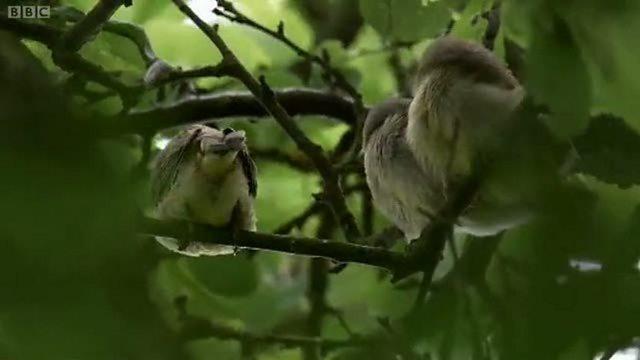 Warblers  away