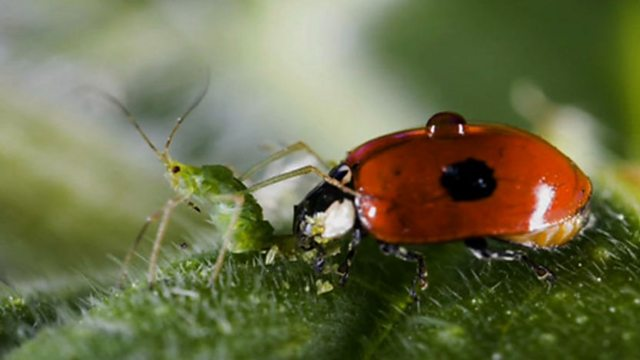 Insects in detail