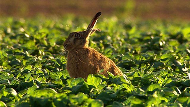 Farmland fauna