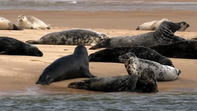 North Norfolk's seals
