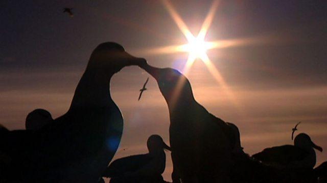 Saving the albatross