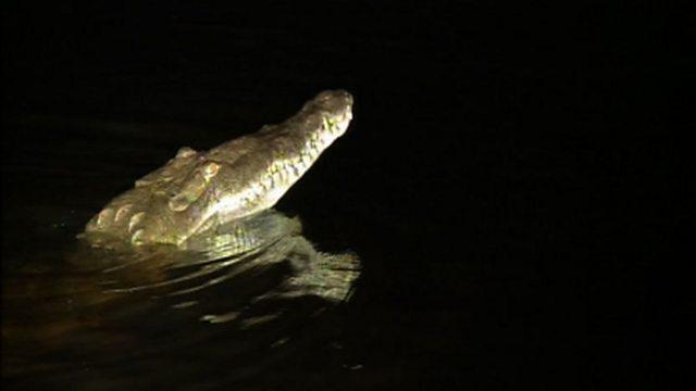 Fishing for crocs