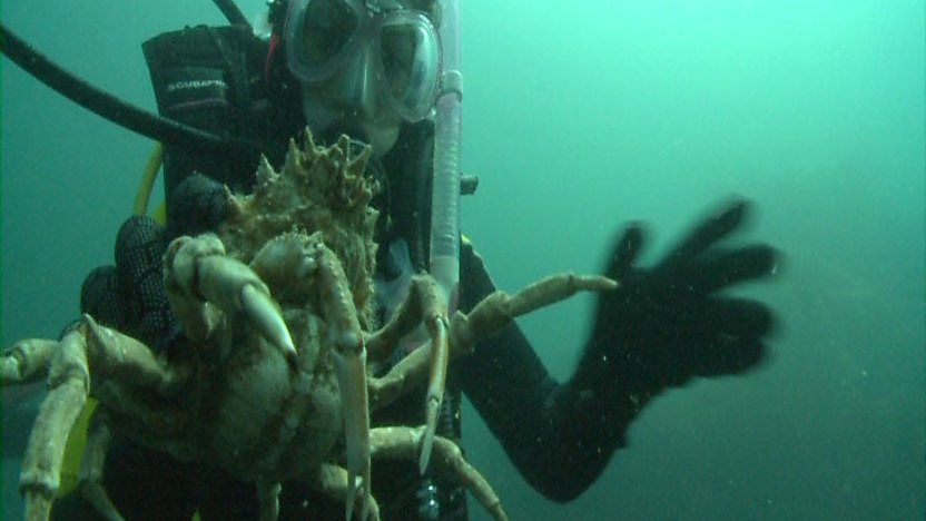 Young scuba diver underwater holding a crab