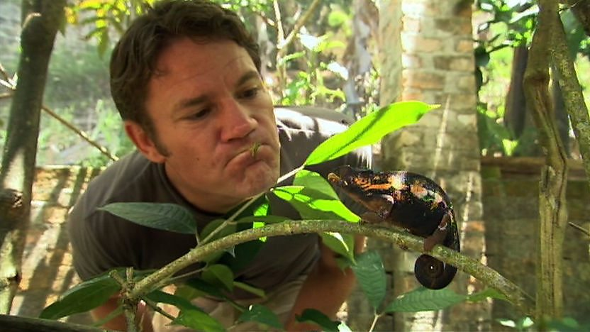 Steve Backshall looking at a chameleon