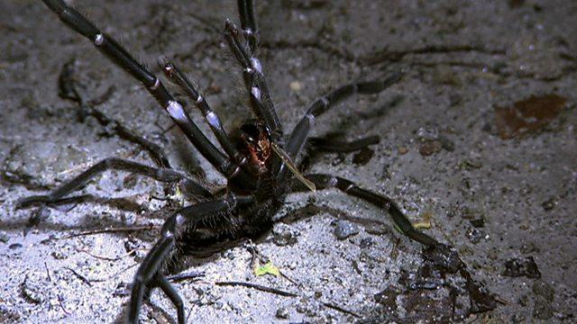 Angry arachnid