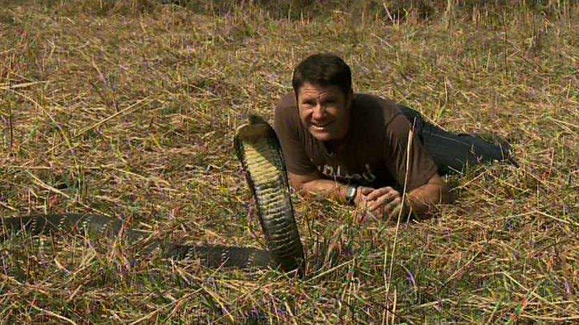 Steve Backshall lying down facing a king cobra