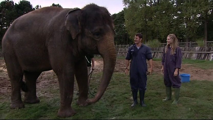 Steve Backshall and Naomi Wilkinson stood next to an elephant.