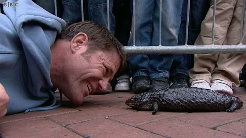 Steve Backshall looking into the eyes of a lizard
