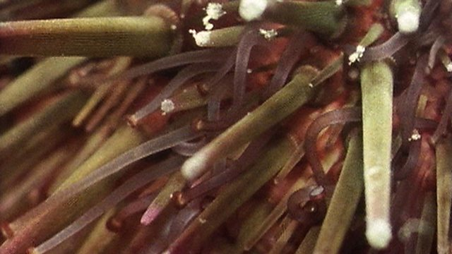 From feather stars to sea urchins: echinoderm evolution