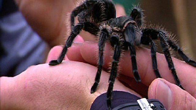 Feel the Fear: Tarantula