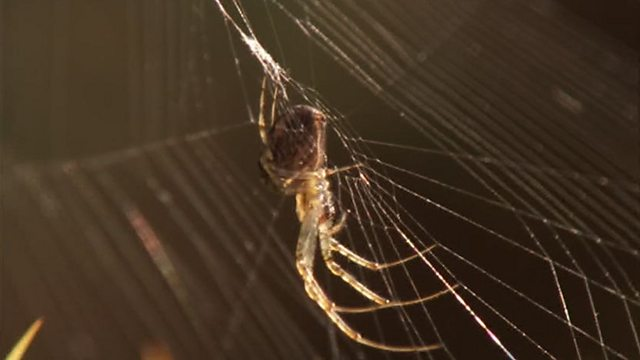 Spider spotting