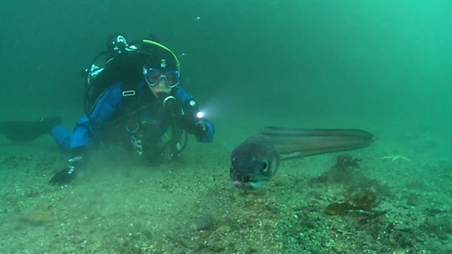Conger eel encounter